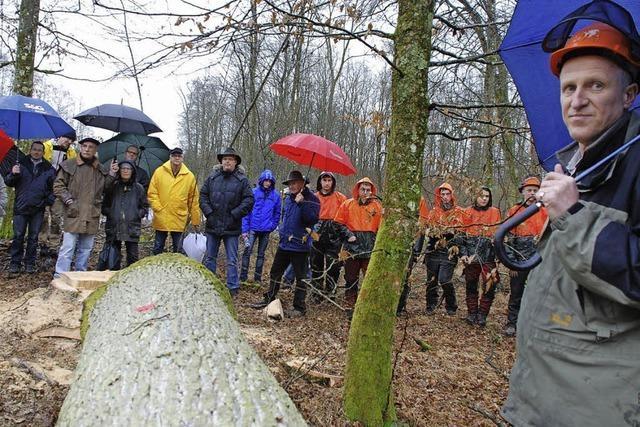 Dauernässe erschwert Holzeinschlag