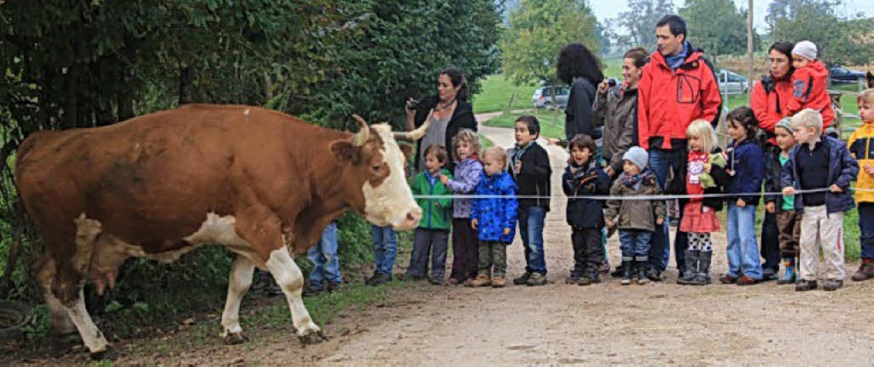 Beim monatlichen Bauernhoftag in Maulb...en die Kinder Landwirtschaft hautnah.   | Foto:  privat