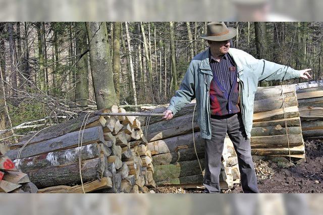Im Stadtwald ist Holzauktion