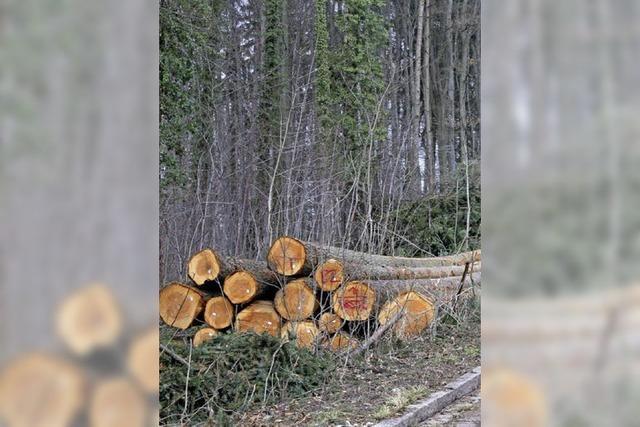 Schonende Moortechnik im Wald