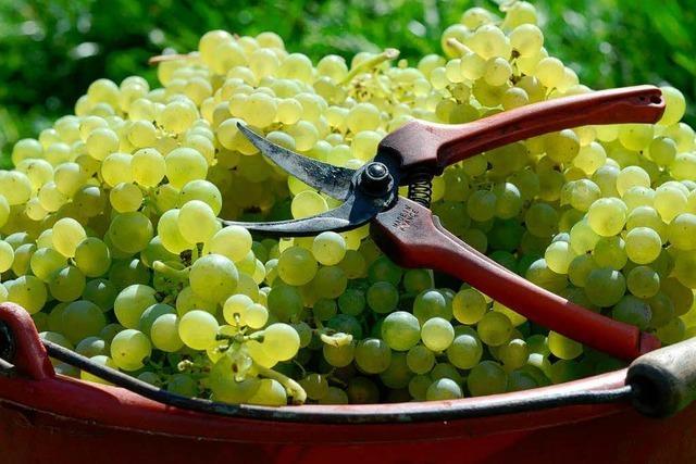 Weinjahr 2013: Edle Tröpfchen – aber deutlich weniger