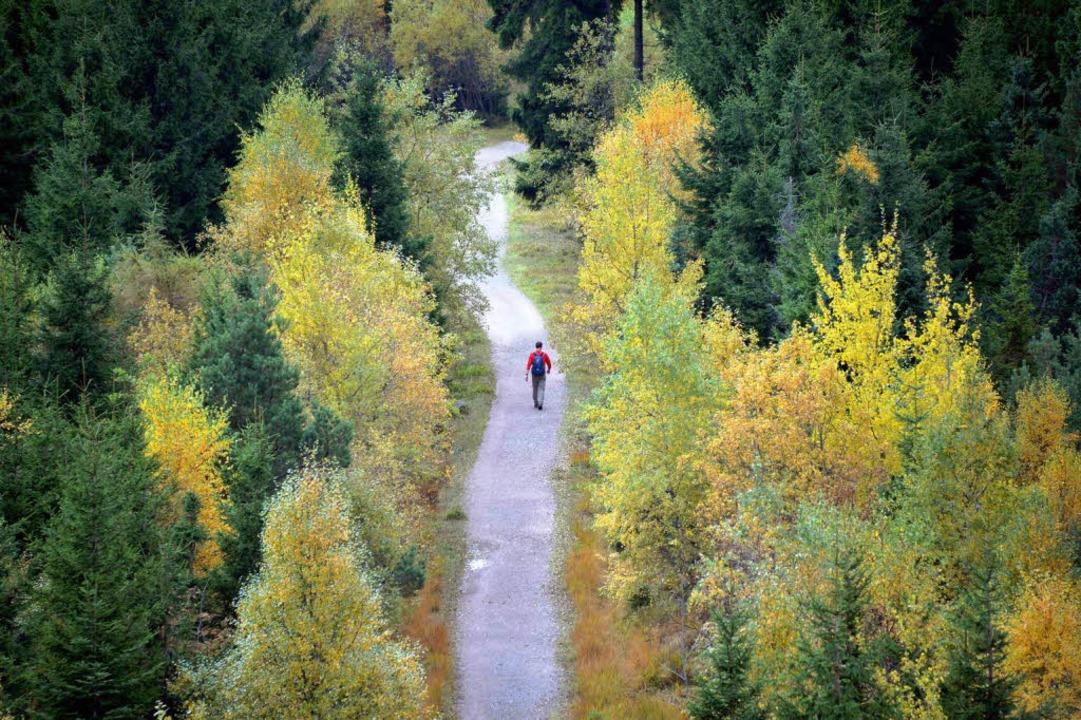 Der Schwarzwald, wie Wanderer ihn lieben.  | Foto: dpa