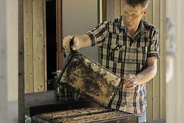 Bienen fehlt das Futter