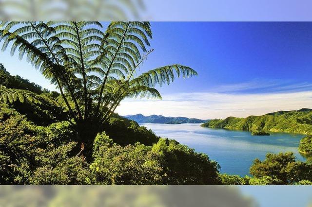 Live-Reportage von Dirk Bleyer in Rheinfelden über Neuseeland