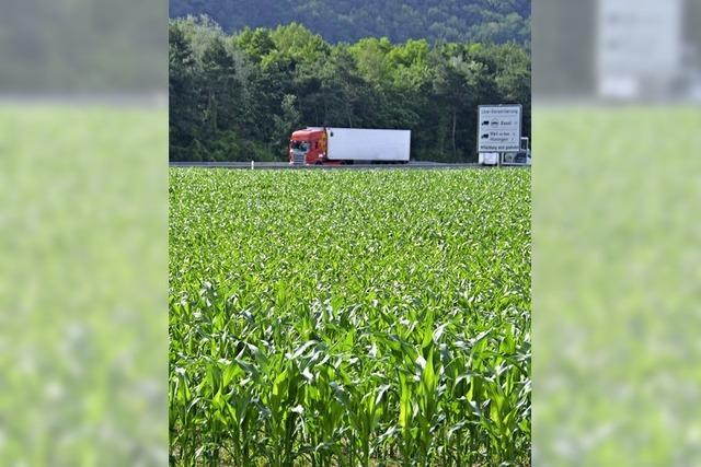 Nach dem Mais kommt das Biotop