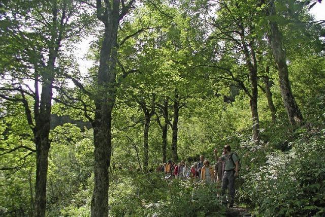 Gemeinderat unternimmt neuen Anlauf in Sachen Biosphärengebiet