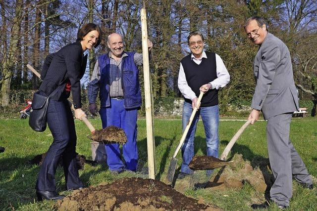 Der OB pflanzt einen Moschtbirebaum