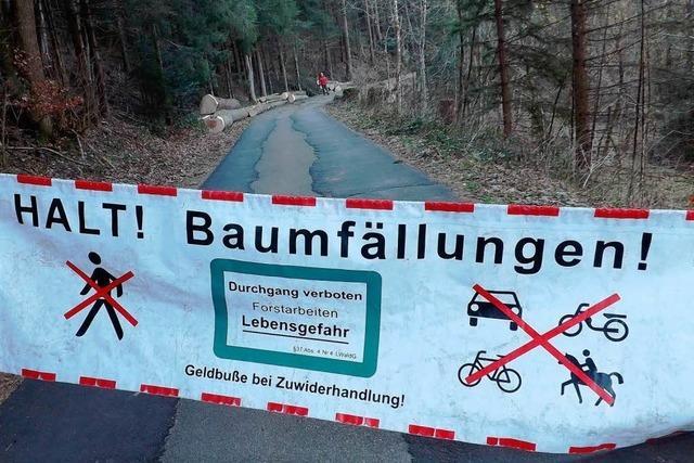Vorsicht Baumfällarbeiten! Doch Spaziergänger lassen sich nicht bremsen