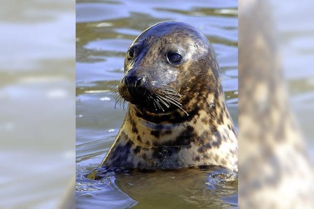In Deutschland gibt es wieder mehr Seeadler, Biber und Robben