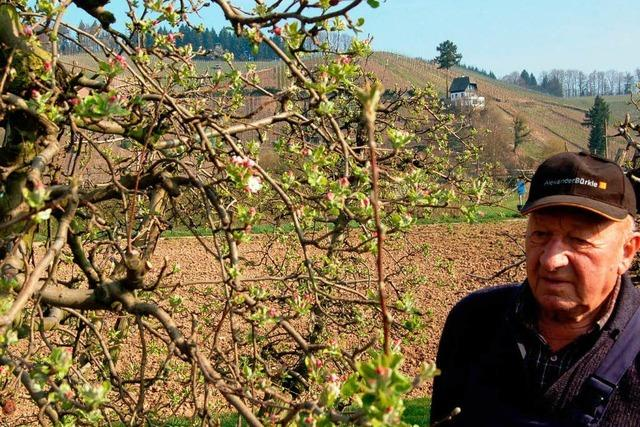 In Buchholz blühen Deutschlands erste Apfelbäume