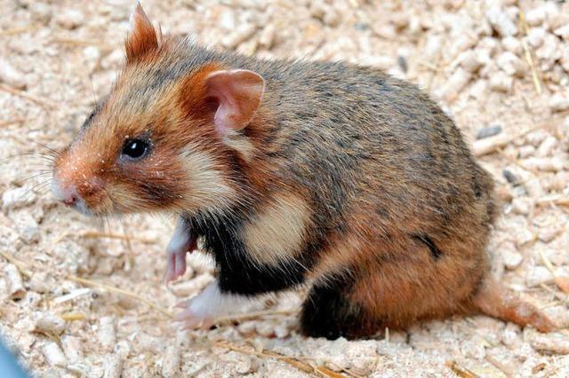 Tierarten bedroht