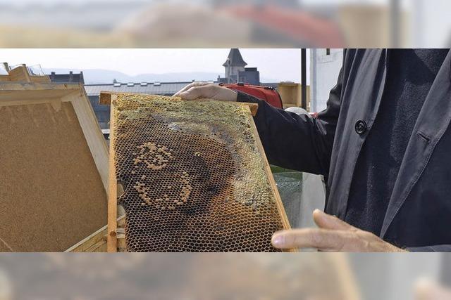 Bienen auf dem Stadthaus