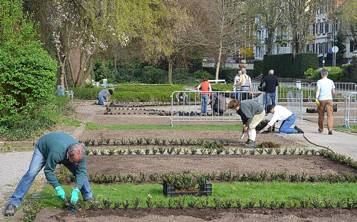 Freiwillige gärtnern im Rosengarten    Foto: Burgmaier Ralf