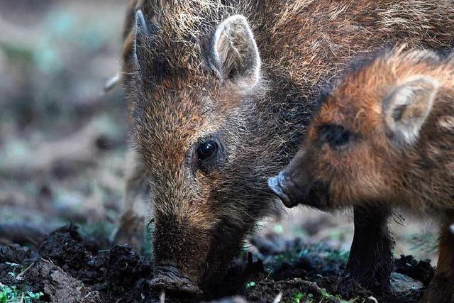 Der Ton im Streit um das Jagdgesetz wird schärfer
