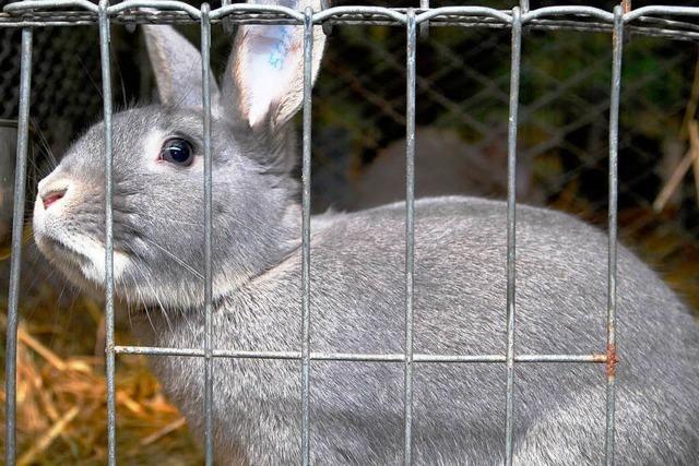 Führte Vernachlässigung zum Tod von sechs Kaninchen?