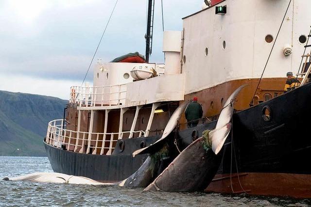 UN-Gericht verbietet Japan Walfang in der Antarktis