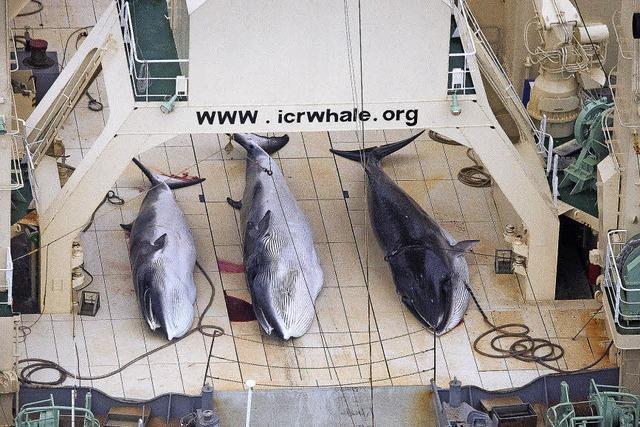 Gericht verbietet Japan den Walfang