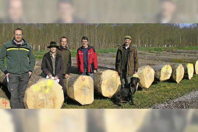 Für Nussbaum und Bergahorn gab es Spitzenpreise