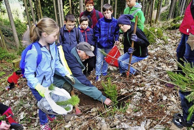 Schüler im Wald fleißig