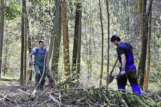 Stadtwald wird umgebaut