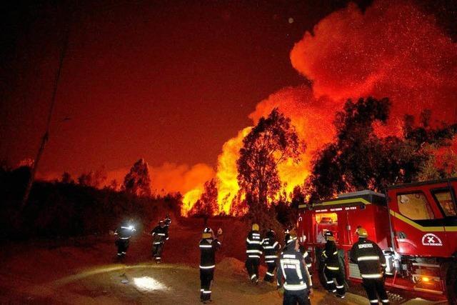 Feuer in Chile: Truthahngeier als Auslöser?