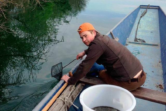 Fischer setzen 50 000 Hechte aus
