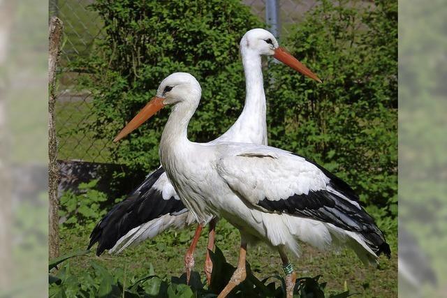 Freundeskreis lädt zum Osterspaziergang im Zoo