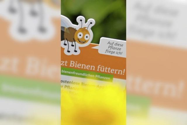 Bienen-App: Deutsche sollen Bienen helfen - mit mehr blühenden Pflanzen