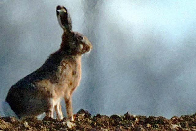 Jäger: Habe seit Jahren keinen Hasen mehr geschossen