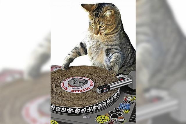 Endlich: Der Plattenspieler für Katzen ist da!