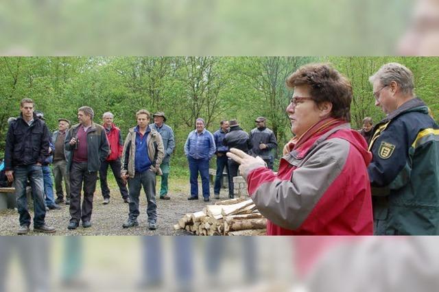 Viel Holz wird aus dem Wald gestohlen