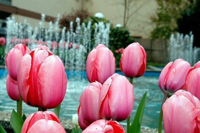 Blütenpracht im Lahrer Stadtpark