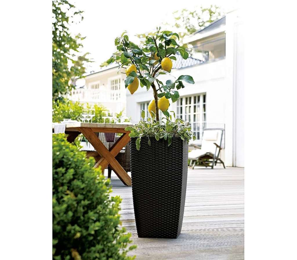 balkon wie im urlaub anzeige k belpflanzen und kr uter schaffen mediterranes flair. Black Bedroom Furniture Sets. Home Design Ideas