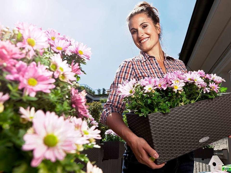 Bei starker Sonneneinstrahlung brauche...Kübelpflanzen regelmäßig Feuchtigkeit.  | Foto: Dehner PRO