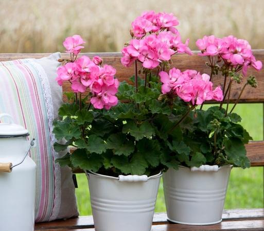 balkon schatten oder s dlage anzeige die richtigen pflanzen f r jede balkonlage badische. Black Bedroom Furniture Sets. Home Design Ideas