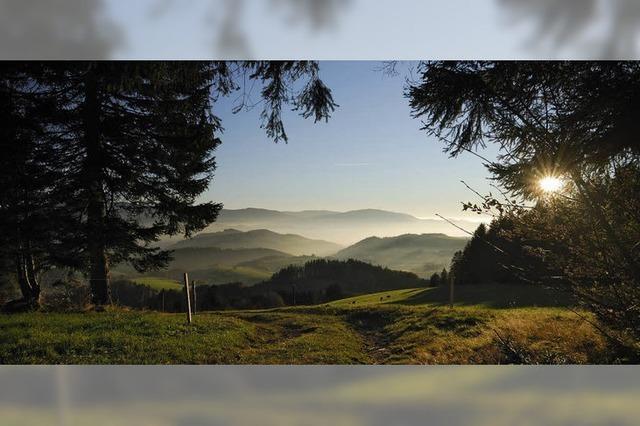 Eine Hommage an den Schwarzwald