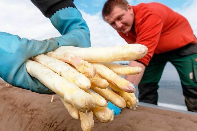 Missmut über Mindestlohn beim Badischen Bauernverband