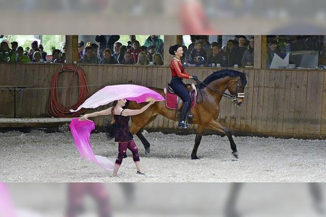 Pferdemarkt erfolgreich wiederbelebt