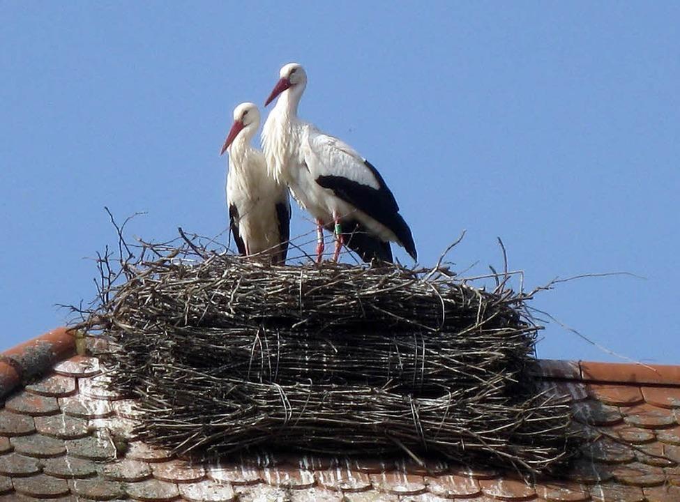Im Jahr 2012 wurde von Meinrad Selinge...paar bewohnt, das derzeit dort brütet.  | Foto: christine weirich