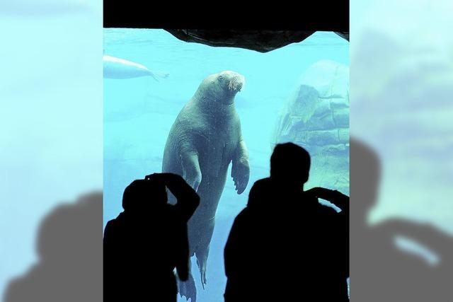 Zootiere bekommen mehr Platz - dennoch Kritik von Tierschützern