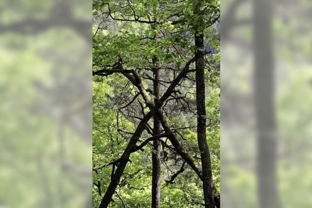 Der Wald spricht