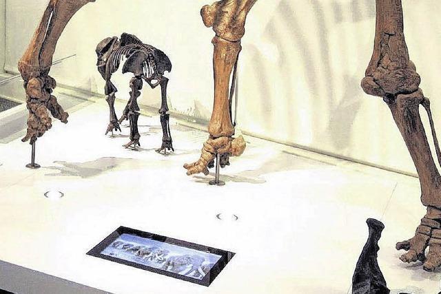 In Niederweningen brüllt das Mammut