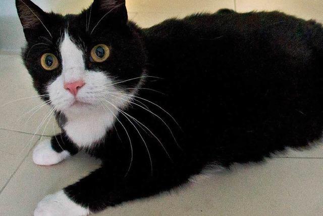 Katze rettet Vierjährigen vor Hundeangriff