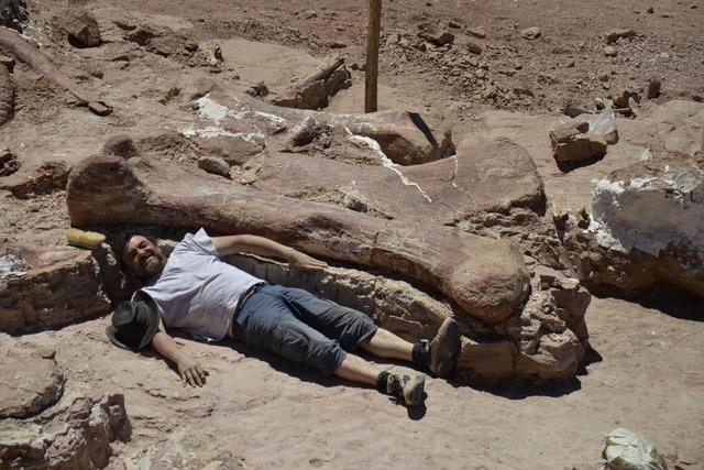 Fund riesiger Dinoknochen