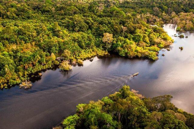 Der Regenwald in Gefahr!