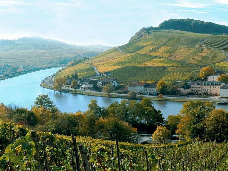 Auf 42 km entlang der Mosel werden vor..., darunter Riesling und Grauburgunder.  | Foto: O.N.T. Luxemburg