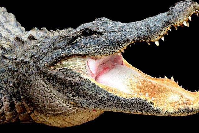 Dicke Russin fällt auf ein Krokodil und verletzt es schwer