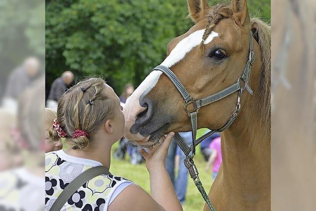 Tag des Pferdes nicht mehr im Grüttpark