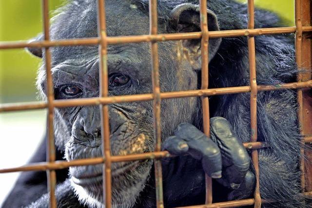 Affenmenschen und Menschenaffen