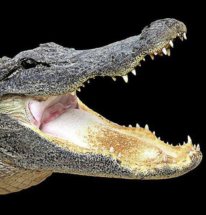 Mensch trifft auf Krokodil – mei...aus als im jüngsten Fall in Russland.   | Foto: Fotolia